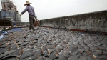 A worker collects pieces of shark fins dried on the rooftop of a factory building in Hong Kong on Jan. 3, 2013. (AP / Kin Cheung)