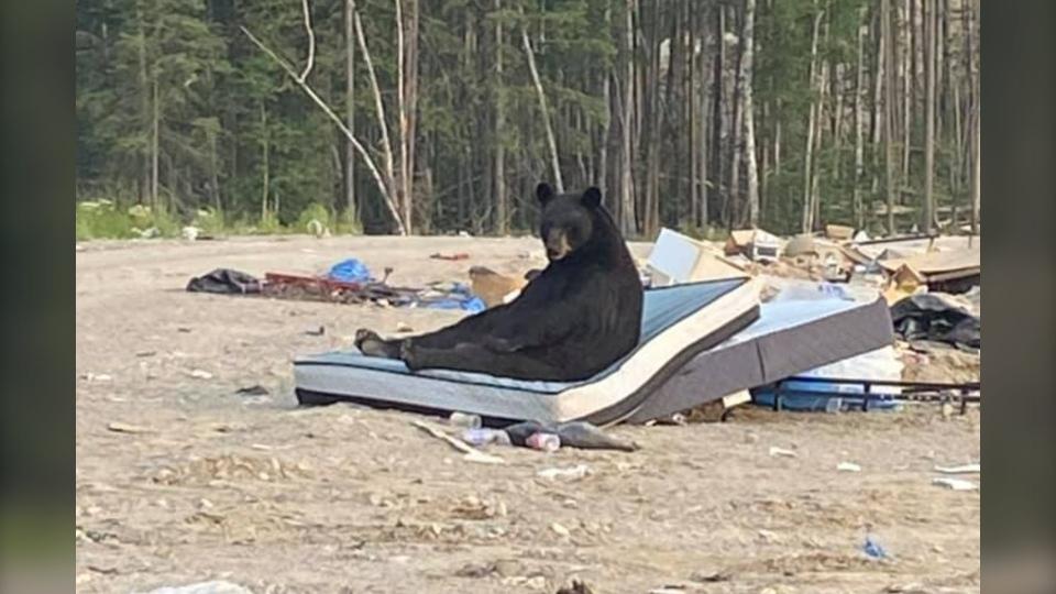 No molestar: oso negro acostado en un colchón